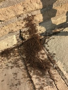 Ant Problem in Spring, Rest Easy Pest Control