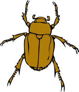 stink bug removal and control on long island and new york