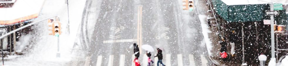 Cold Weather Bugs, Insects that Survive Winter in NYC