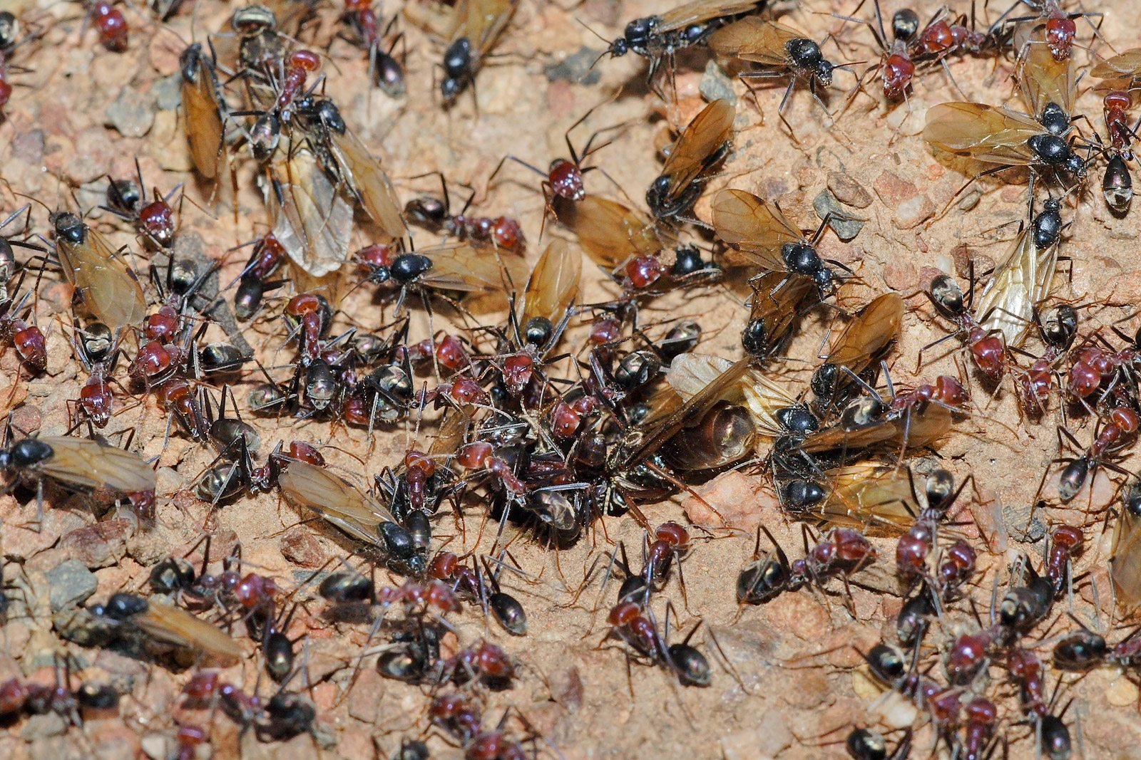 pest control Harbor Isle, pest control Harbor Hills, bed bugs, Rest Easy pest Control, Pest control services, Long Island NY, NYC, Rockland, Westchester, New York, Long Island, Pest Control, Exterminator, Brooklyn, Bronx, Staten Island, NY, exterminator, Nassau County, Suffolk County, bugs, bed bugs, organic pest control, organic exterminator, organic pest, ants,