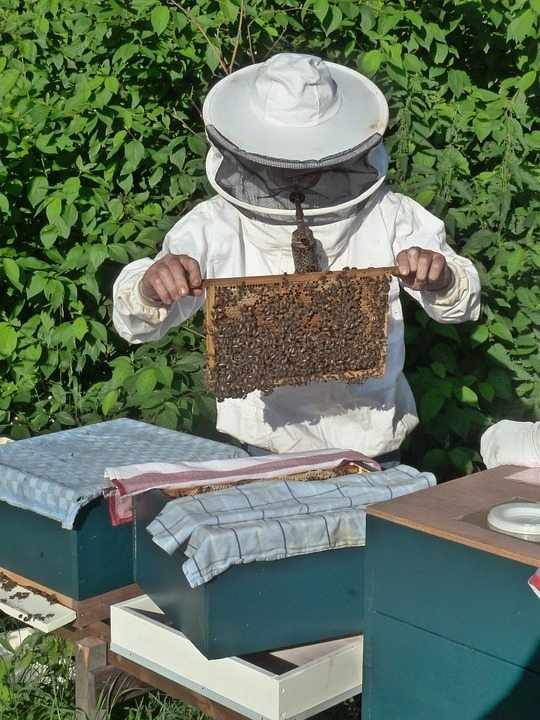 pest control uniondale, eliminate bees and wasps, bee, Rest Easy pest Control, Pest control services, Long Island NY, NYC, Rockland, Westchester, New York, Long Island, Pest Control, Exterminator, Brooklyn, Bronx, Staten Island, NY, exterminator, Nassau County, Suffolk County, bugs, bed bugs, organic pest control, organic exterminator, organic pest, ants,