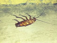5-signs-of-cockroach-infestation