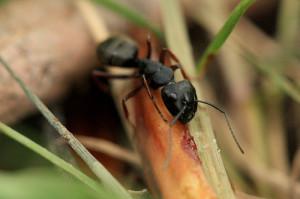 carpenter ants damage, 010307353_cbb5cdd897