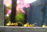 ant-infestation