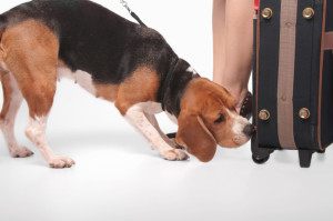 Encounters With Bed Bugs, bed-bug-dog-banner-image