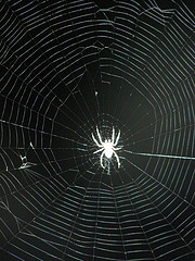 Keep Spiders Out, common-spiders1