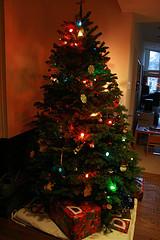 household-bugs-christmas