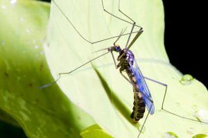 household-bugs-dangerous-blod