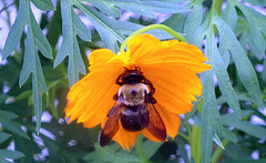 how-do-i-get-rid-of-bees-3