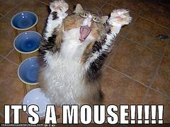 Mice Nightmare, mice-in-home-meme