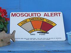 Home Repellents vs Pest Control Services, mosquito-elimination-methods-5