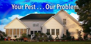 long island exterminator, long island pest control, long island, new york, ny, pest control, exterminator, bed bugs, ants, termites, rodents
