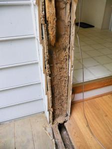 Termites: new species, termite-infestation