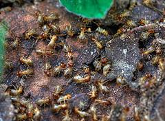 termite-infestation-baiting-system