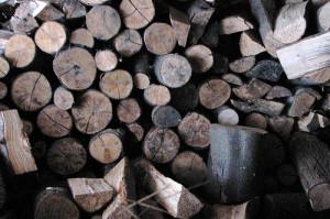 Firewood Termite Infestation, termite-infestation-firewood-2