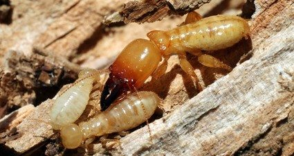 Termite Problems: Avoid These Mighty 'Mites