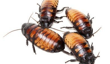Roaches in House: Facts About Cockroaches You Probably Didn't Know