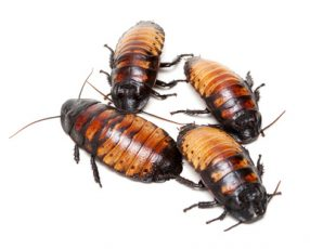 Roach Invasion: Horror Story of the Week