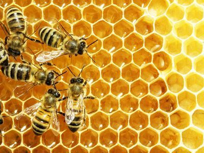 Nassau Bees like High Fructose Corn Syrup?