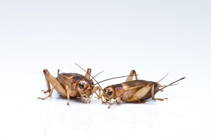 Facts About Pest Control: Long Island
