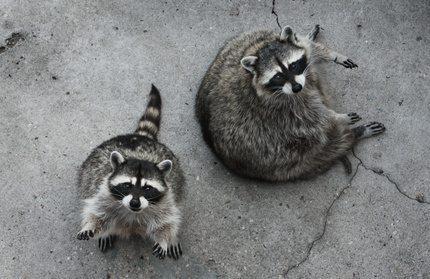 Cute Critters? Think Again