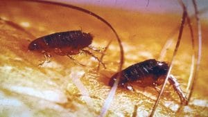 7 Common Spring Pests: Prepare to Lookout for These Pests in the Spring Months