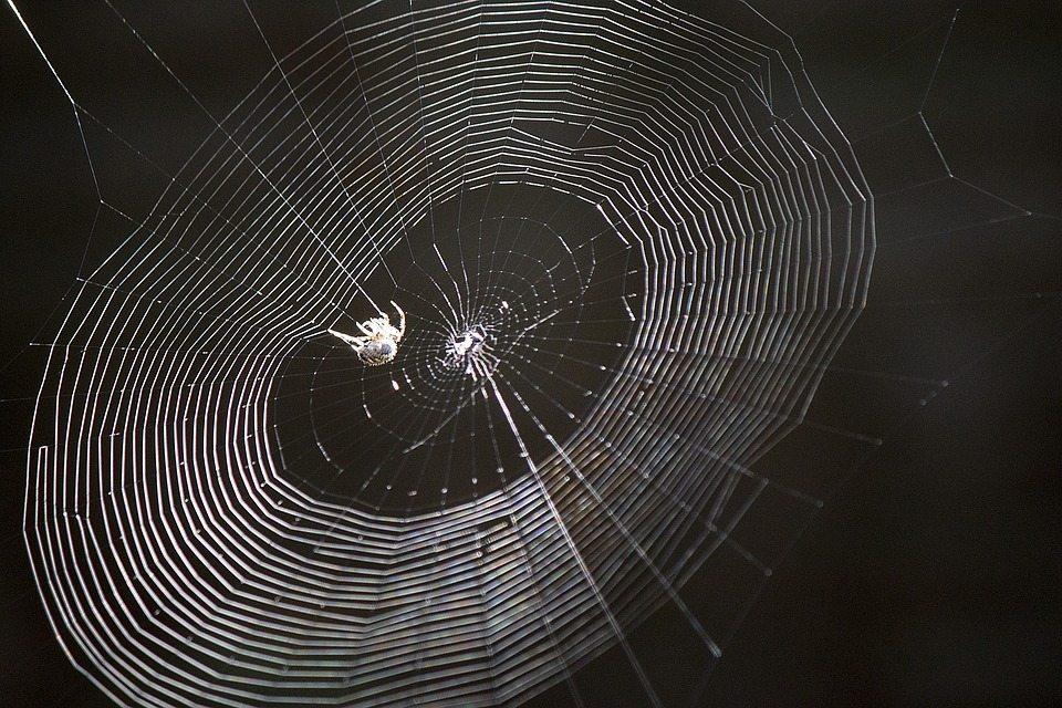 pest control Hicksville, spider silk, Rest Easy pest Control, Pest control services, Long Island NY, NYC, Rockland, Westchester, New York, Long Island, Pest Control, Exterminator, Brooklyn, Bronx, Staten Island, NY, exterminator, Nassau County, Suffolk County, bugs, bed bugs, organic pest control, organic exterminator, organic pest, ants,