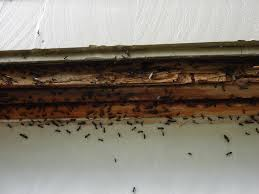 Ant Problem in Spring: How to Prevent Ants Invading Your House, Rest Easy Pest Control