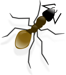Ants, Ants Infestation, Rest Easy Pest Control, NYC & Long Island Exterminator