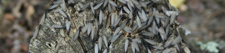 How To Avoid A Firewood Termite Infestation