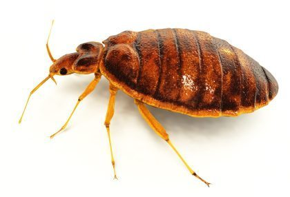 Bed Bug Removal, Rest Easy Pest Control, NYC & Long Island Exterminator