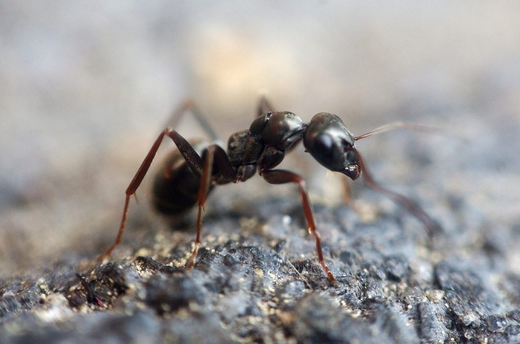 NYC Spring Ant Pest Control For Your Home
