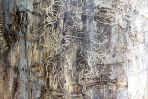What Is Termites Role in the Ecosystem?