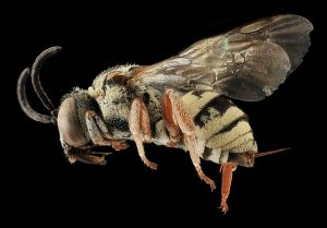 Bees, Wasps & Hornets: What to do with them