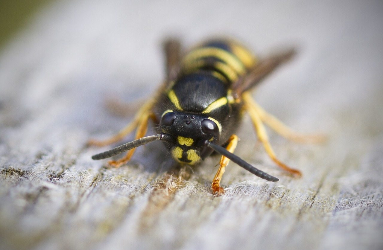Avoid Getting Stung By Bees And Wasps Rest Easy Pest