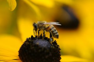 Bees and Wasps Facts: Watch Out! These Colors Will Make Bees and Wasps Attack