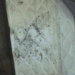 Pest Control Port Washington, Pest Control University Gardens, Pest Control Island Trees, Rest Easy pest Control, Pest control services, Long Island NY, NYC, Rockland, Westchester, New York, Long Island, Pest Control, Exterminator, Brooklyn, Bronx, Staten Island, NY, exterminator, Nassau County, Suffolk County, bugs, bed bugs, organic pest control, organic exterminator, organic pest, Getting a termite infestation problem under control quickly, contact us, rest easy, pest control, exterminator, nyc, new york city, brooklyn, queens, nassau, suffolk, new york, rockland westchester, bed bugs, organic pest, Rest Easy pest Control, Pest control services, Long Island NY, NYC, Rockland, Westchester, New York, Long Island, Pest Control, Exterminator, Brooklyn, Bronx, Staten Island, NY, exterminator, Nassau County, Suffolk County, bugs, bed bugs, organic pest control, organic exterminator, organic pest, ants, ants persisting