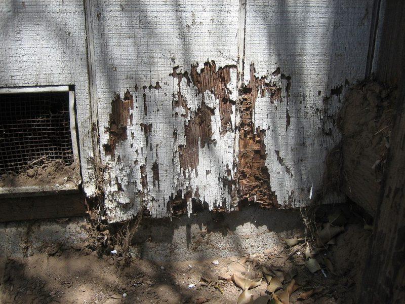 Organic Mosquito Control Long Island