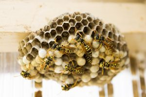 Bees and Wasps, Get Rid of Bees & Wasps: Why It's Best to Call a Pest Control Specialist, Rest Easy Pest Control, NYC & Long Island Exterminator