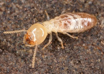 6 Interesting Facts About Termites, Rest Easy Pest Control
