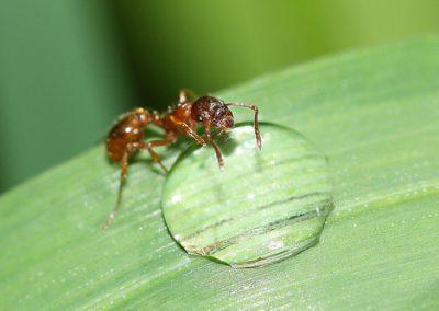 ant_palmbeach01