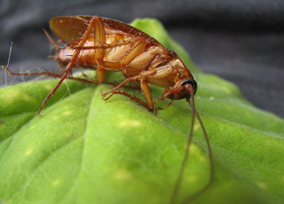 Pest Control West Hempstead, Rest Easy Pest Control