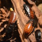 Arthropods, Rest Easy Pest Control