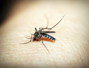 7 Good Ways to Control Mosquitoes Around Your Home, Rest Easy Pest Control