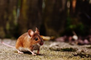 Multifamily Properties Pest Control in NYC and Long Island