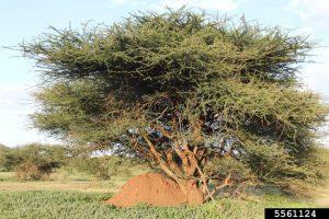termite mound, Rest Easy Pest Control
