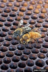 Bee Facts: 6 Interesting Facts About Bees You Probably Didn't Know