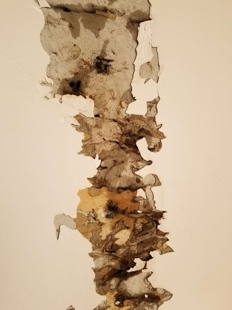 Signs of Termites: Seven Signs Your Property Has a Termite Infestation