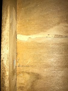 drywood termite, Drywood & Subterranean Termite Infestation: Signs and Treatment Options, Rest Easy Pest Control