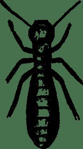 termite damage, rest easy pest control
